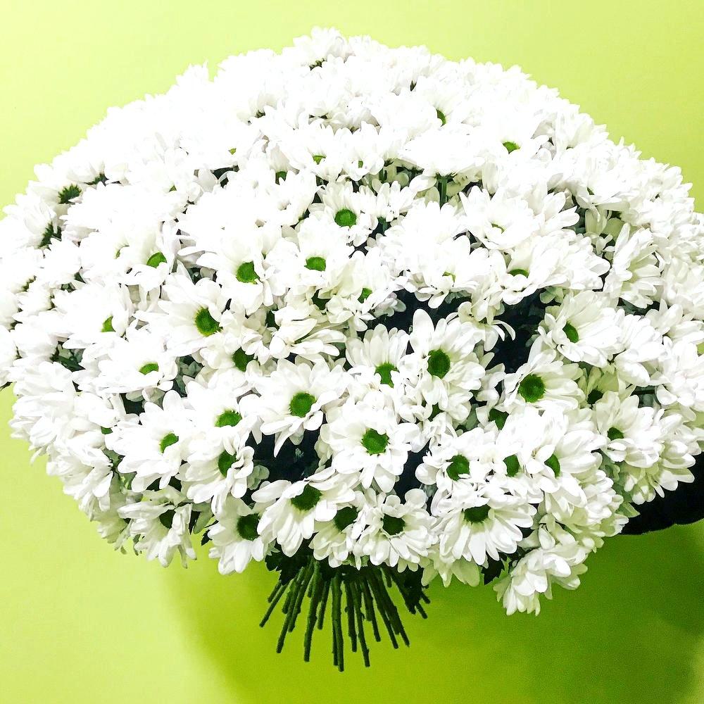Огромный букет цветов «Миллион ромашек»