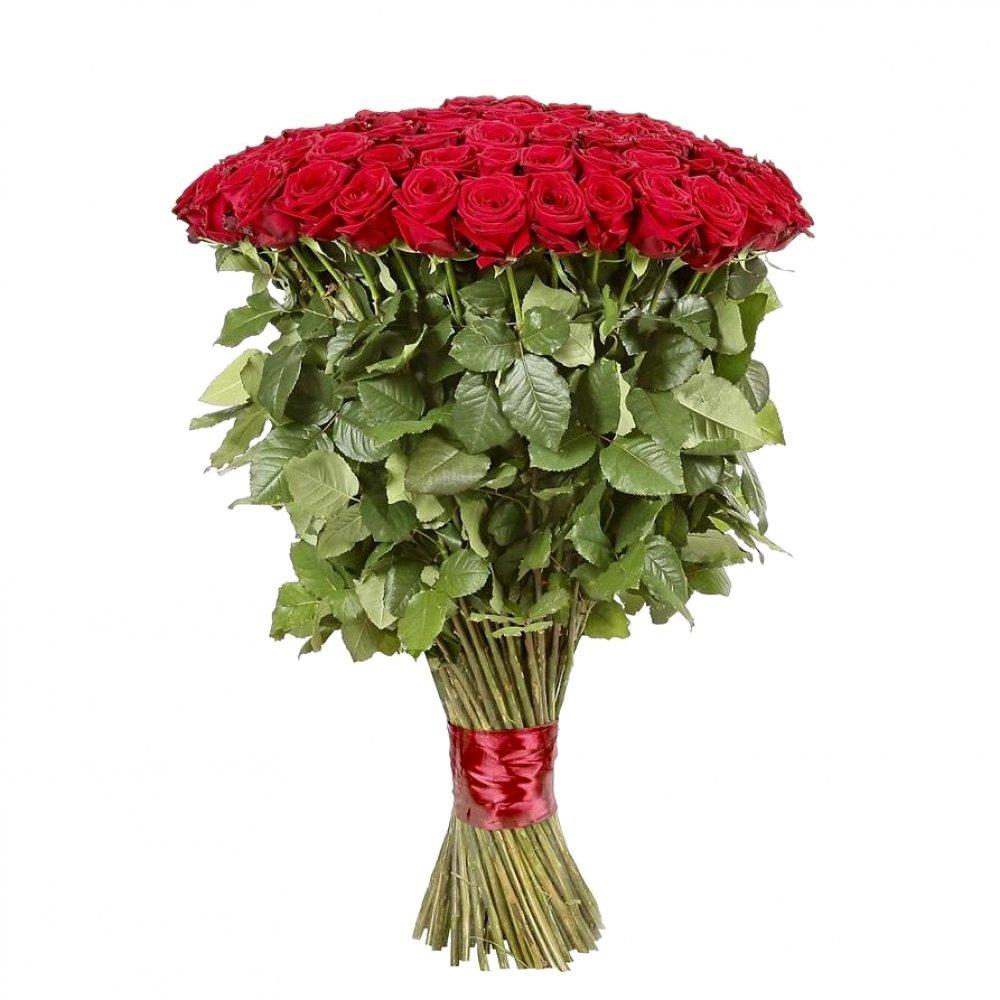 101 высокая красная роза