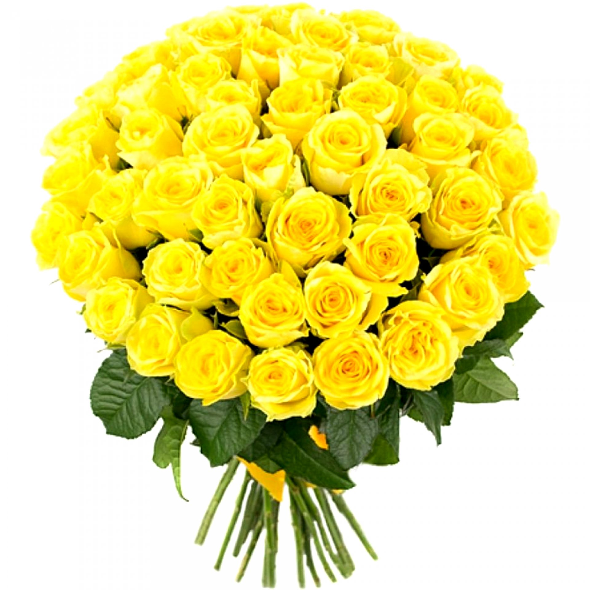 Букет желтых роз (101 шт)