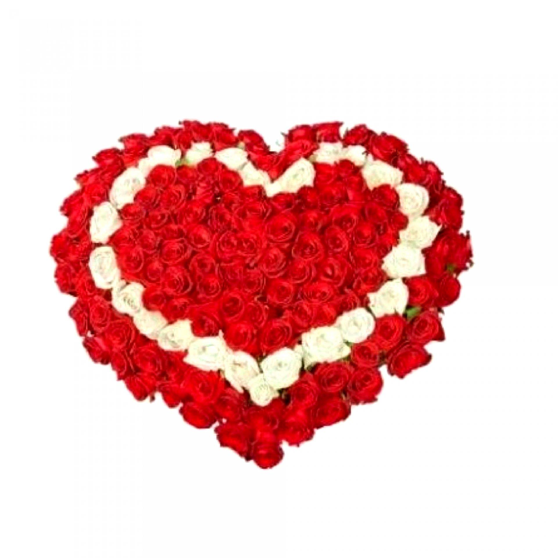 Сердце из роз (101 шт)