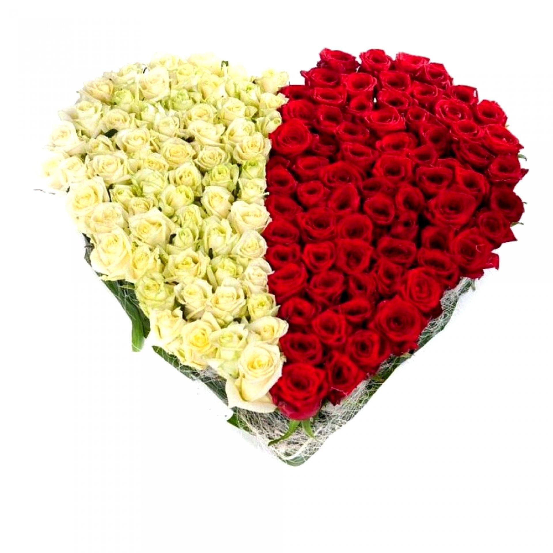 Сердце из красных и белых роз (51 шт)