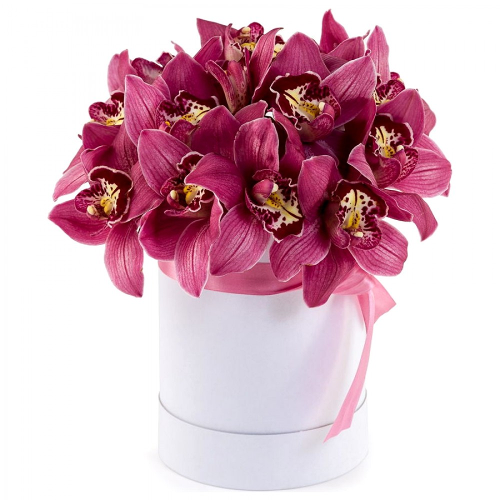 Орхидеи в коробке «Вельвет»
